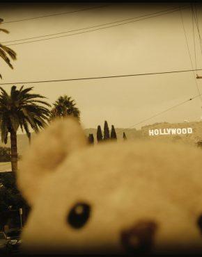 Hollywood_Bear-Samira Dudzinski-Bild-artig
