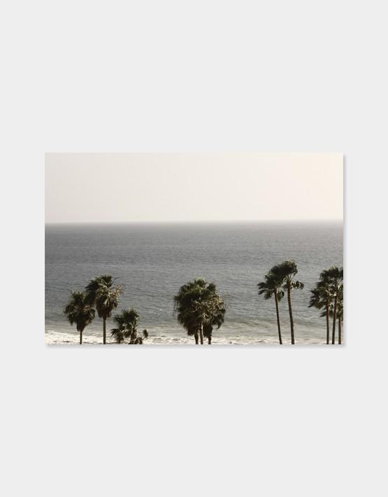 """Schönes Bild """"Palms"""" am Meer von LA in Venice"""